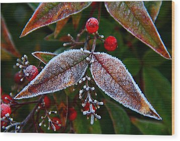 Frosted Nandina Leaves Wood Print