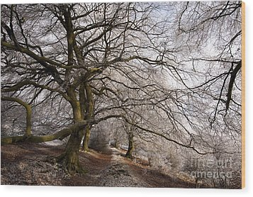 Frosted Path Wood Print by Anne Gilbert