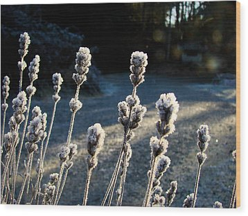 Frosted Wood Print by Ronda Broatch