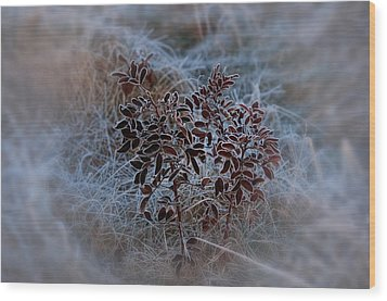 Frosted Rugosa Wood Print by Susan Capuano