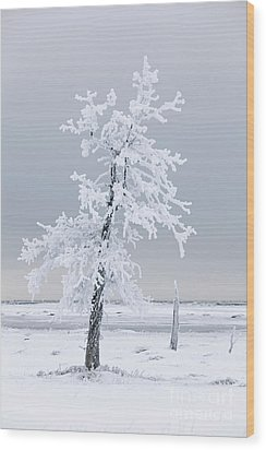 Frosted Tree Wood Print by Tim Grams