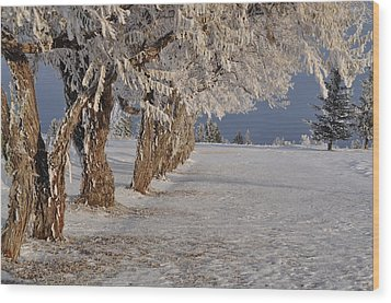 Wood Print featuring the photograph Frosted Trees by Fran Riley