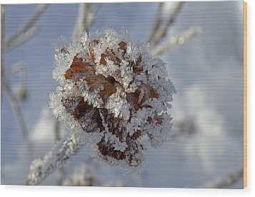 Frosted Willow Rose Wood Print by Cathy Mahnke