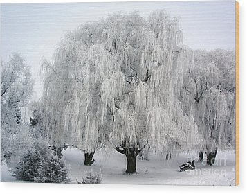 Frosted Willow Trees Wood Print