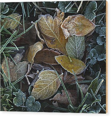Frosty Autumn Leaves Wood Print