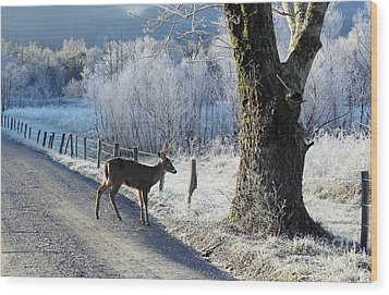 Frosty Cades Cove II Wood Print by Douglas Stucky