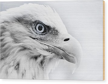 Frosty Eagle Wood Print