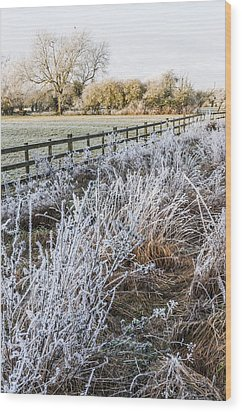 Frosty Landscape Wood Print by David Isaacson