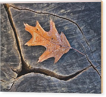 Frosty Leaf On Tree Trunk Wood Print by Gary Slawsky