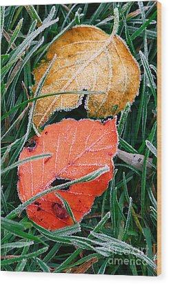 Frosty Leaves Wood Print by Elena Elisseeva