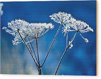 Frosty Light Wood Print