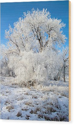 Frosty Morning Wood Print by Shane Bechler