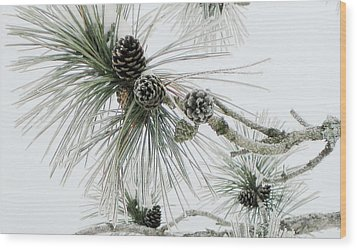 Frosty Pine Cones Wood Print by Carolyn Reinhart