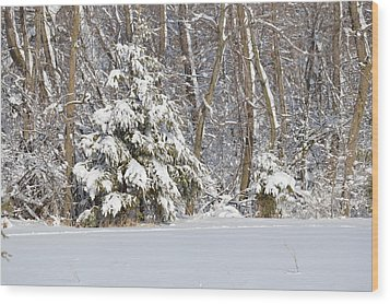 Wood Print featuring the photograph Frosty Pine by Dacia Doroff
