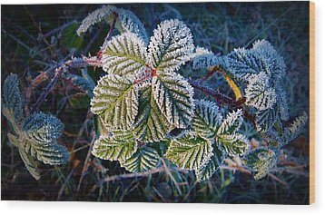 Wood Print featuring the photograph Frosty Ten Degrees by Julia Hassett