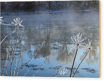 Frosty Webs And Weeds Wood Print by Hanne Lore Koehler