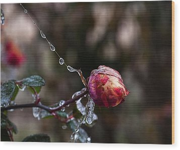 Froze Rose Wood Print