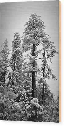 Frozen Beauty Wood Print by Betty Depee