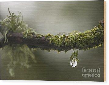 Frozen Droplet Wood Print by Anne Gilbert