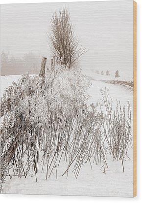 Frozen Fog On A Hedgerow - Bw Wood Print