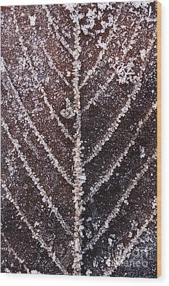 Frozen Leaf Wood Print by Anne Gilbert