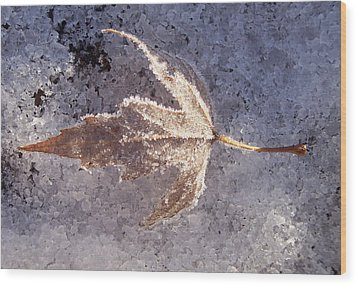 Frozen Leaf Wood Print by Richard Bryce and Family