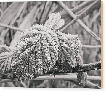 Frozen Leave Wood Print by Yvon van der Wijk