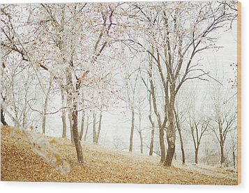 Frozen Spring Wood Print by Silvia Floarea Toth