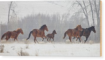 Frozen Track Wood Print by Mike  Dawson