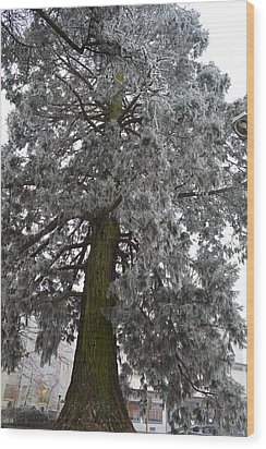 Wood Print featuring the photograph Frozen Tree 2 by Felicia Tica