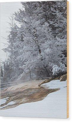 Frozen Tree Wood Print