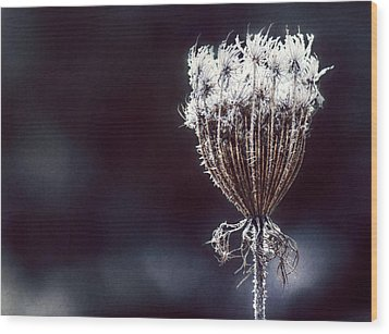 Wood Print featuring the photograph Frozen Wisps by Melanie Lankford Photography