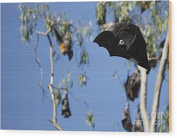 Fruit Bat Wood Print