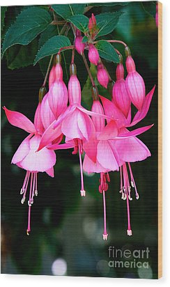 Wood Print featuring the photograph Fuchsia  by Vinnie Oakes