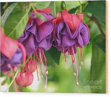Fuchsias Wood Print