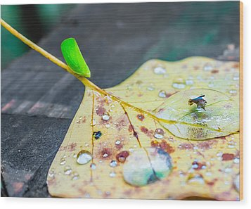 Wood Print featuring the photograph Fulgoroidea On A Leaf by Rob Sellers