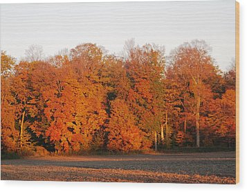 Full Colour Morning Wood Print by Sheila Byers