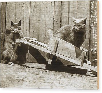 Wood Print featuring the photograph Fun With Cats Henry King Nourse Photographer Circa 1900 by California Views Mr Pat Hathaway Archives