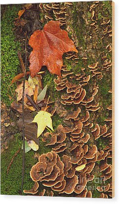 Wood Print featuring the photograph Fungi by Jim McCain