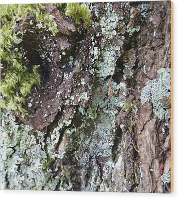 Wood Print featuring the photograph Fungus Bark by Laurie Tsemak