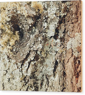 Wood Print featuring the photograph Fungus Bark Vintage by Laurie Tsemak