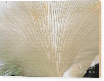 Fungus Wood Print by Steven Ralser