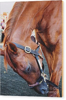 Funny Cide A Champion Wood Print