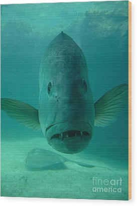 Funny Fish Face Wood Print by Amy Cicconi