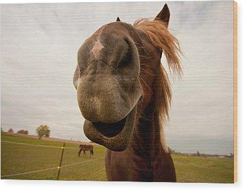Funny Horse Wood Print by Paulina Szajek