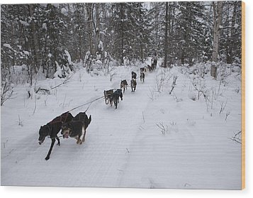 Fur Rondy Races Wood Print by Tim Grams