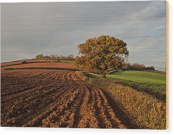 Furrows And Field Wood Print by Pete Hemington