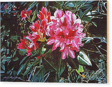 Fuschia Rhododendrons Wood Print by David Lloyd Glover