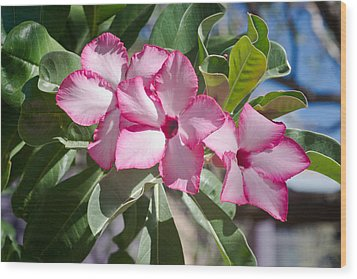 Fushia Oleander Near Phoenx Arizona 2 Wood Print by Douglas Barnett