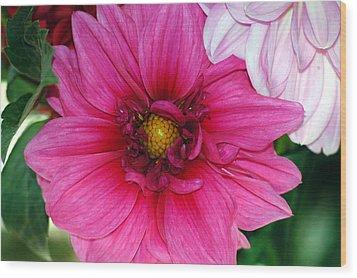 Fushia Pink Dahlia Wood Print by Lehua Pekelo-Stearns